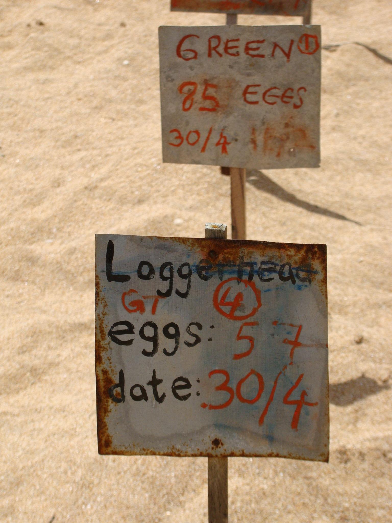Der Schildkröten-Eier-Dealer