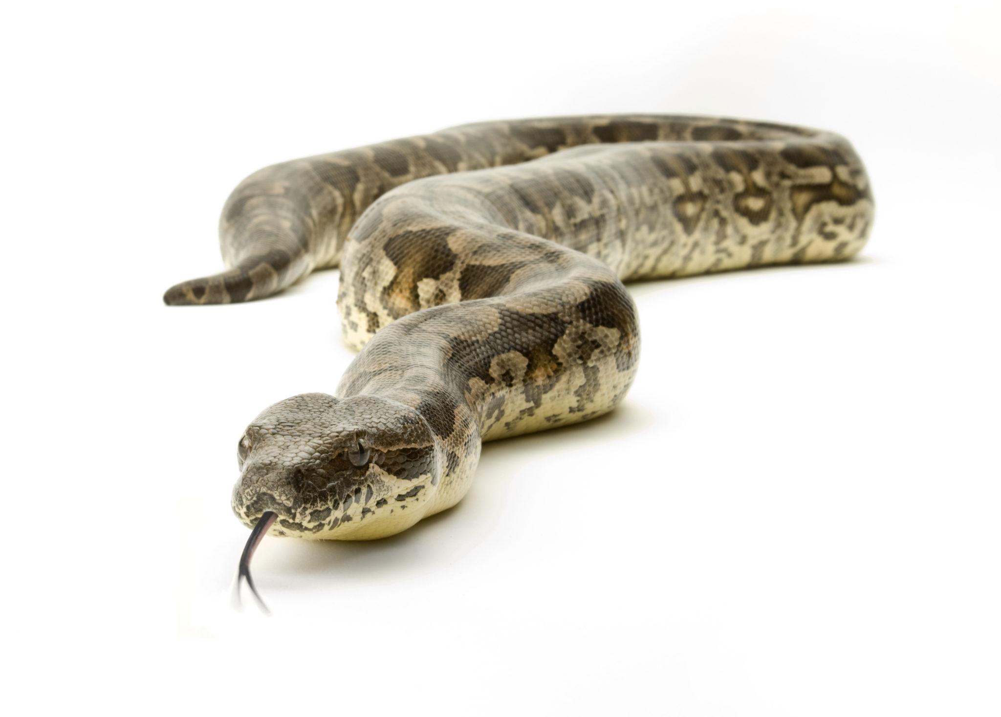 Die Rückkehr der Schlangen