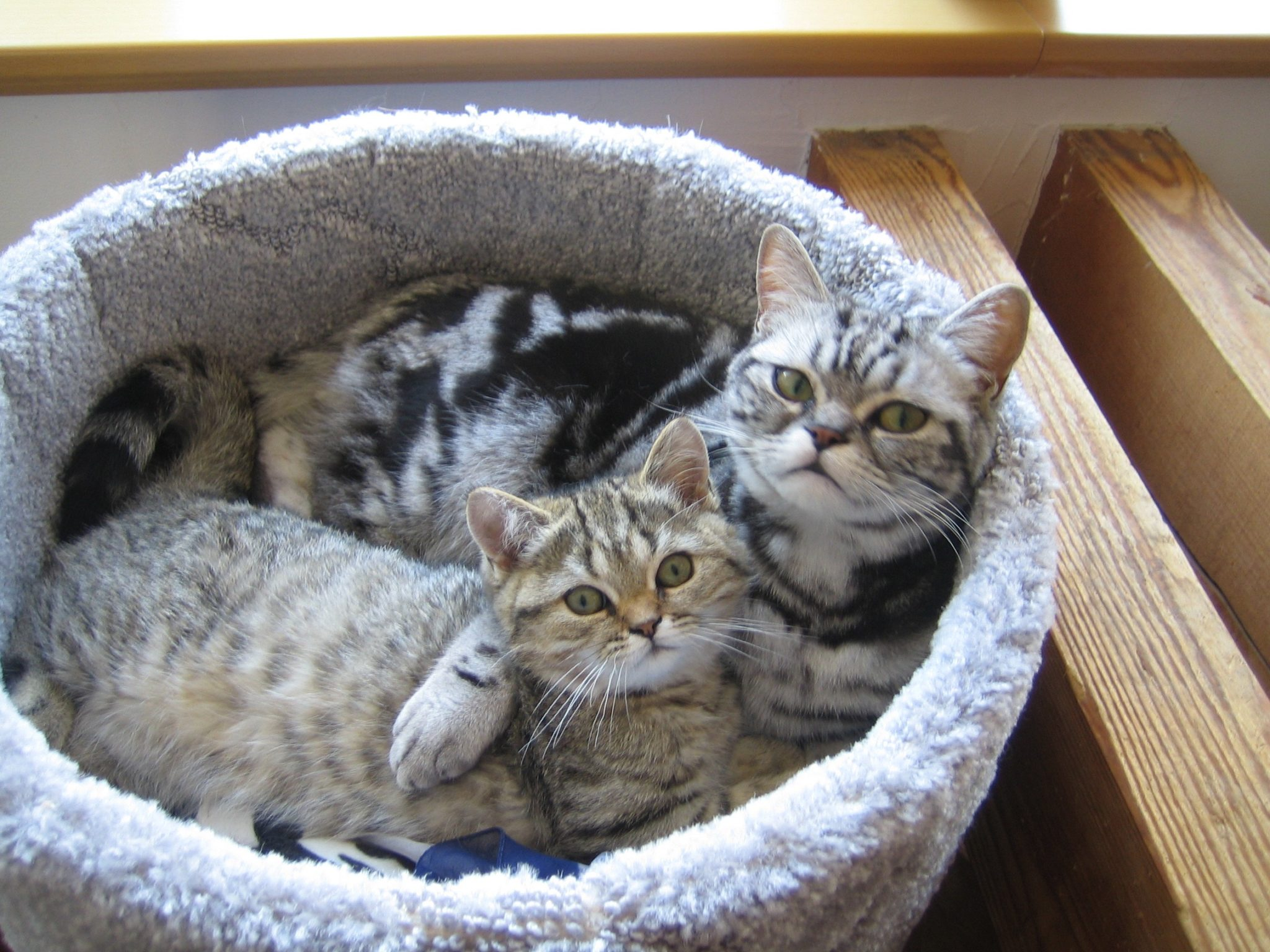 Dementer Hund und lahme Katze