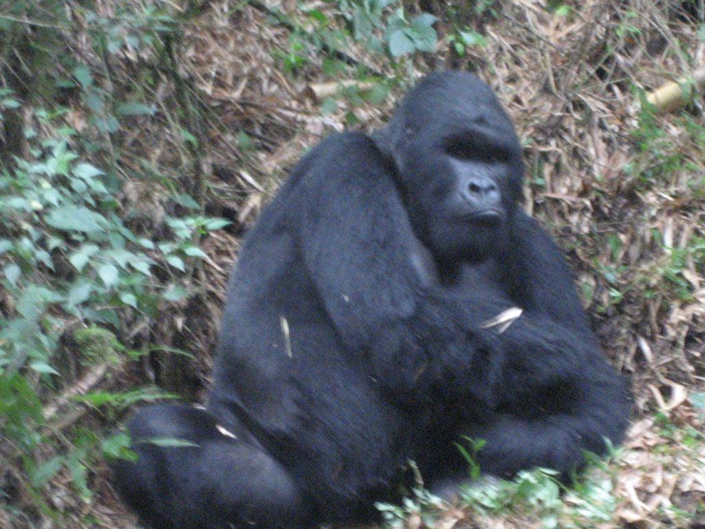 ruanda-2007-086