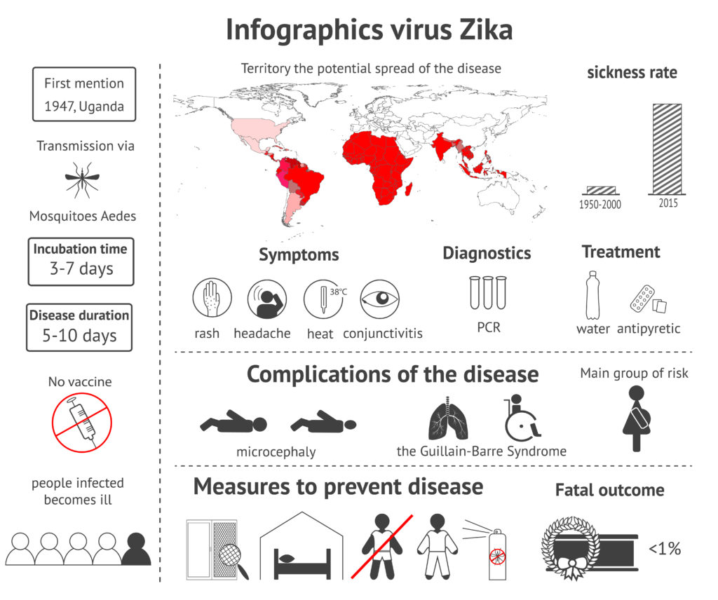 Infographics virus Zika - information about symptoms, treatment, consequences and prevention of illness