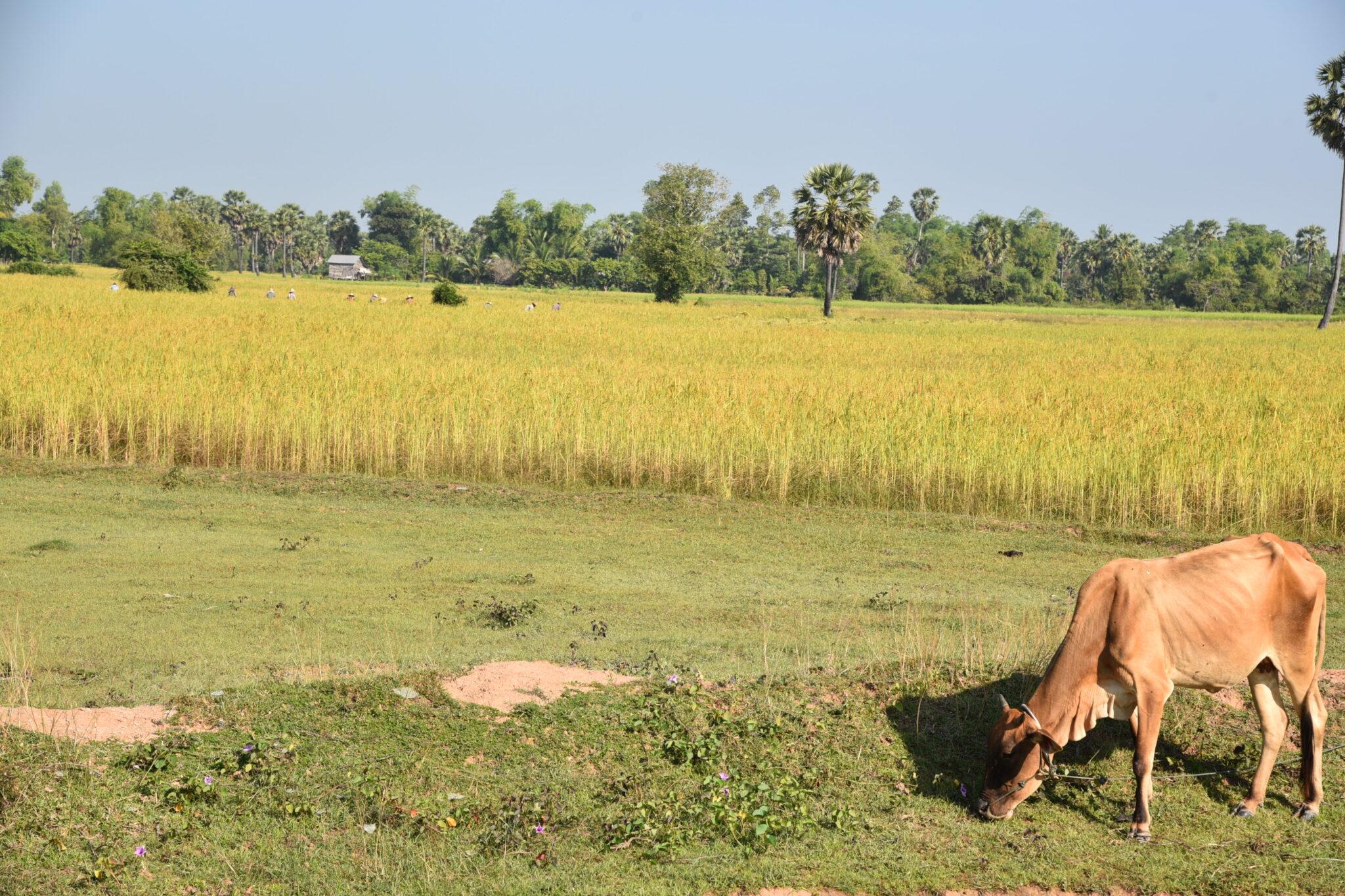 Zuger Hilfe für Kambodscha